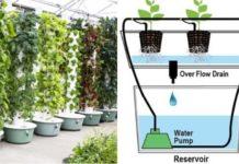 Aeroponic Gardening Ideas.