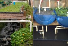 Aquaponic Gardening Techniques.