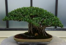 Bonsai Gardening Techniques.