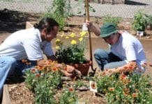 Community Gardening Ideas.