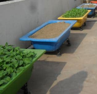 Containers for Vegetable Gardening On Terrace.