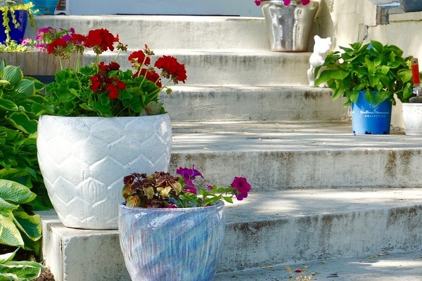 Growing Flowers in Containers-Pots at Home Stairs.