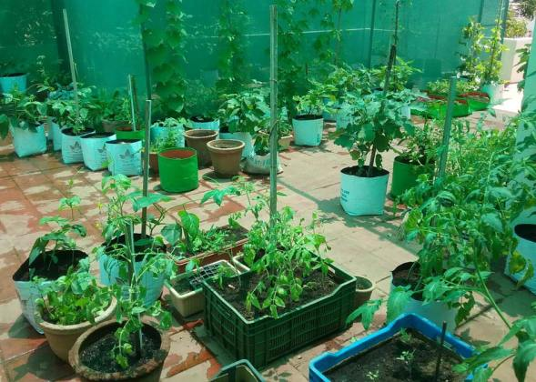 How To Grow Vegetables On Home Terrace.