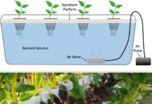Water Culture Hydroponic System.