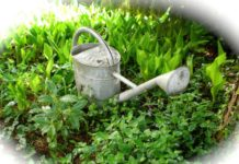 Moderan Gardening Ideas.
