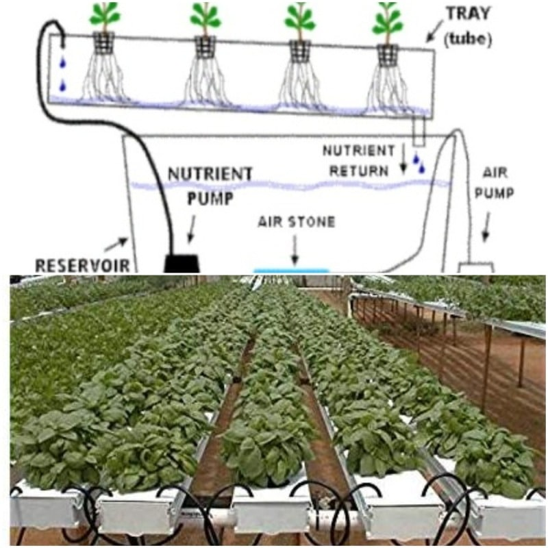 The typical NFT hydroponics system.