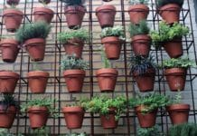 Urban Gardening Ideas.