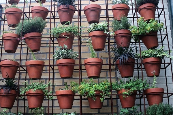 Urban Gardening Ideas Tips And Techniques Gardening Tips