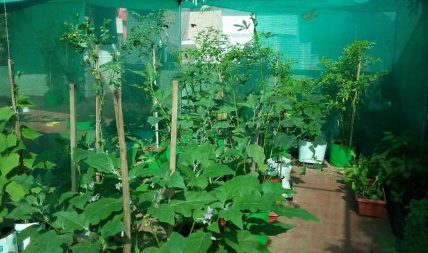 Vegetable Terrace Gardening Tips.