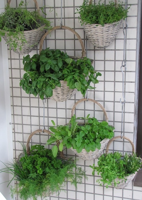 Vertical Gardening Techniques and Ideas.