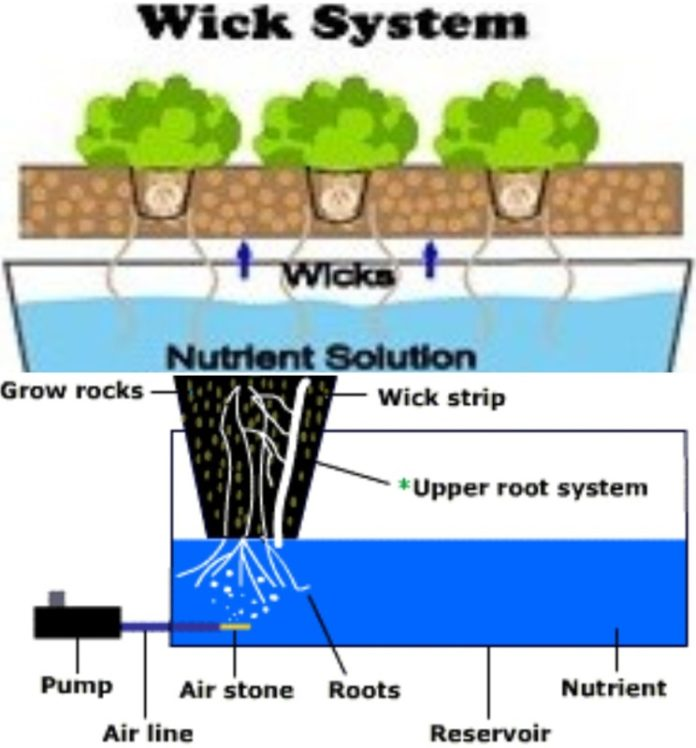 Hydroponics Wick System for Beginners | Gardening Tips