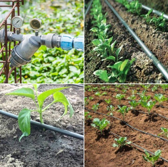 Garden Drip System.