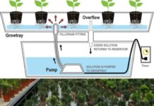 Ebb and Flow of Hydroponics.