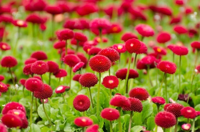 Growing Flowers in Summer.