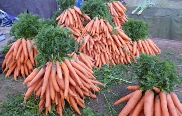 Harvested Carrots.