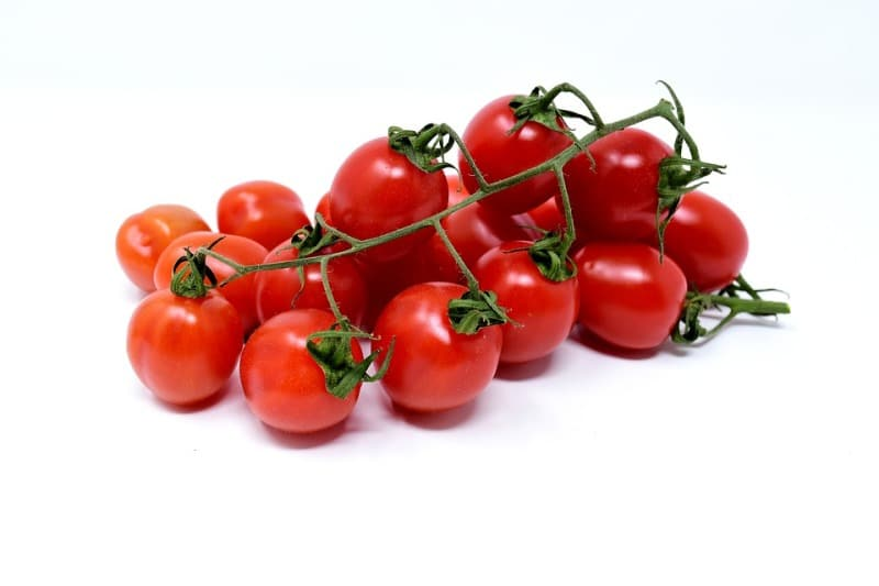 Harvesting of Tomatoes.