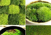 Indoor Moss Gardening.