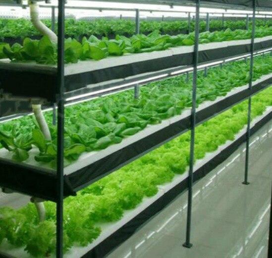 LED Light Indoor Gardening.