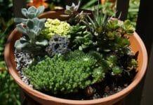 Miniature Gardening Techniques.