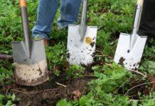Monsoon Gardening Ideas.