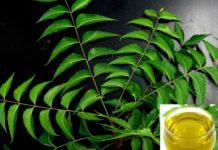 Neem Oil Pesticide Formulation.