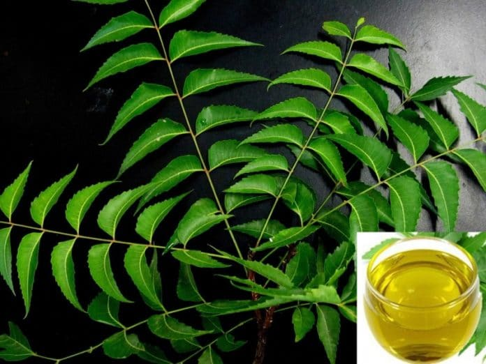 Neem Oil Pesticide Formulation for Garden Plants | Gardening