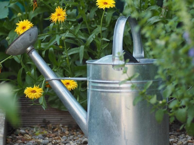 Watering Plants in Summer.