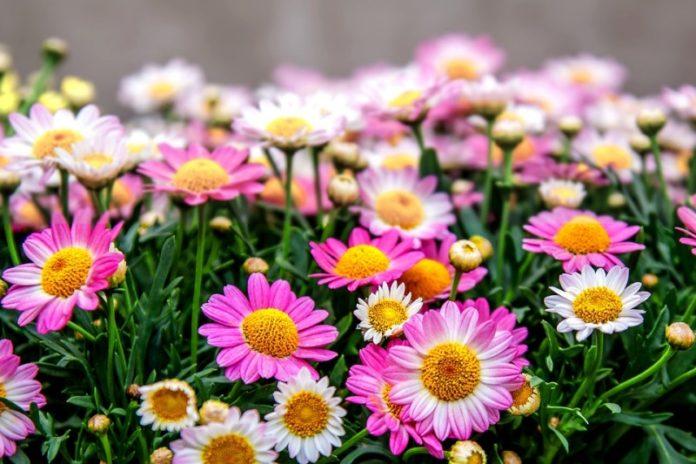 Hydroponic Flowers List.