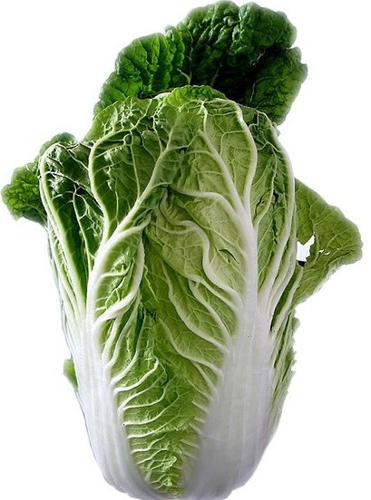 Facts of Chinese Cabbage.
