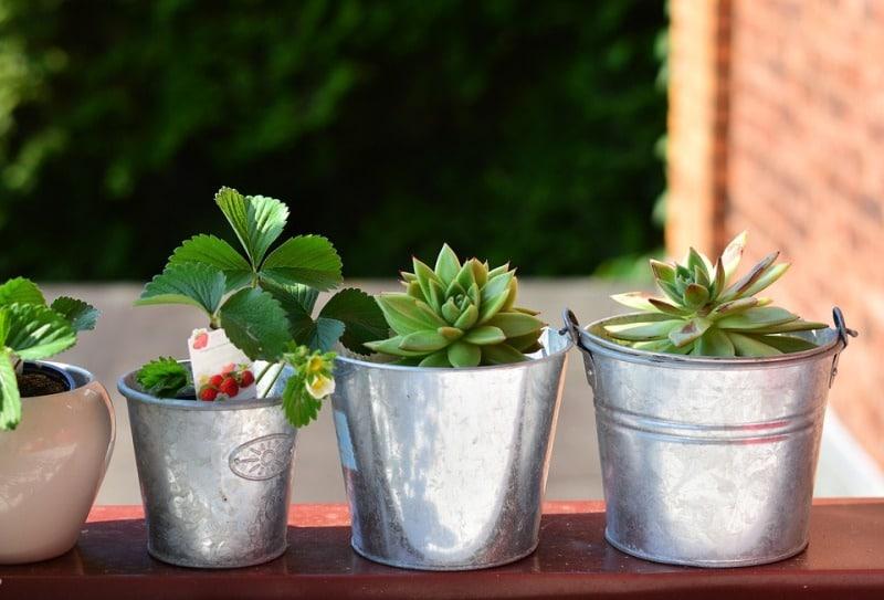 Growing Pots for Balcony Garden.