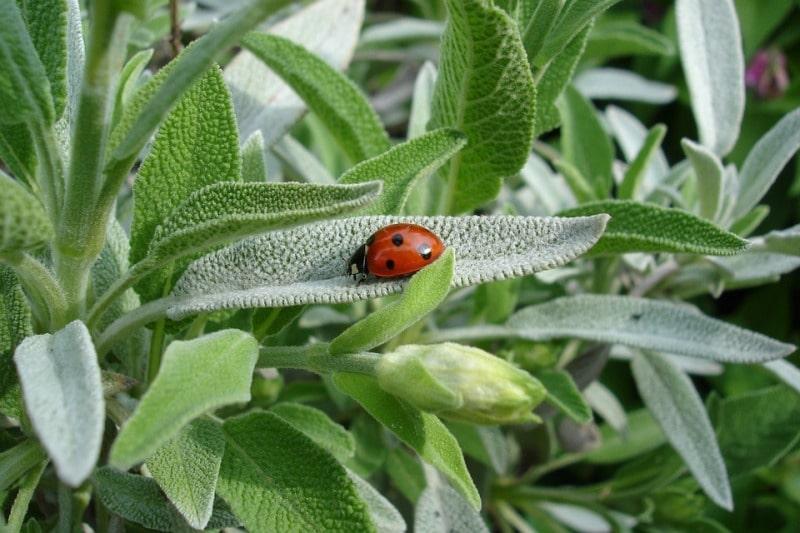 Sage Plant Care.