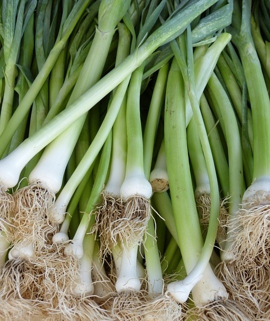 Harvested Spring Onions.