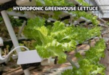 Hydroponic Greenhouse Farming.