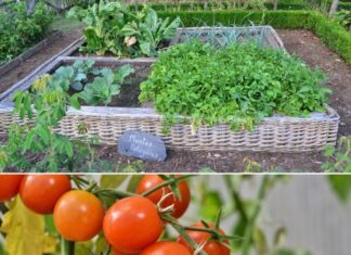 How to Start a Vegetable Garden from Scratch.