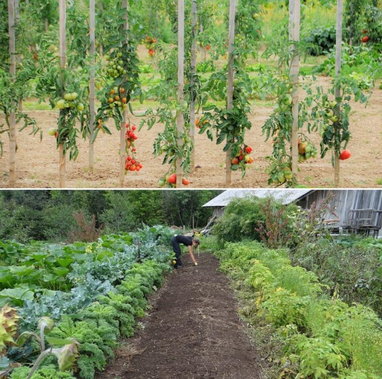Starting Vegetable Garden from Scratch.