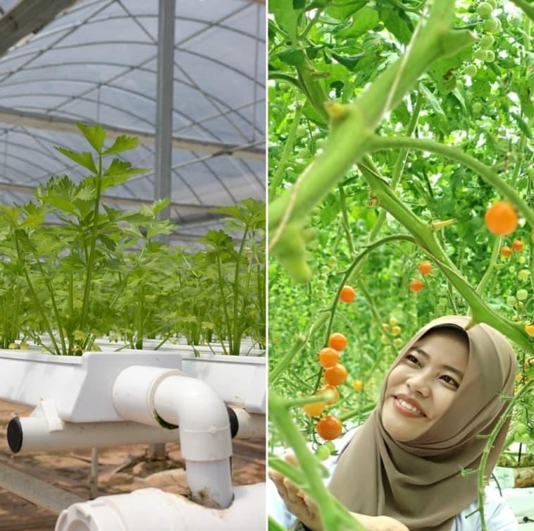 Hydroponic Farming Benefits.