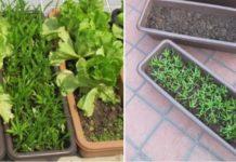 Rooftop Vegetable Gardening, Design, Layout in India.