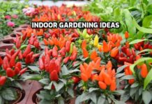 Indoor Gardening Ideas, Tips.