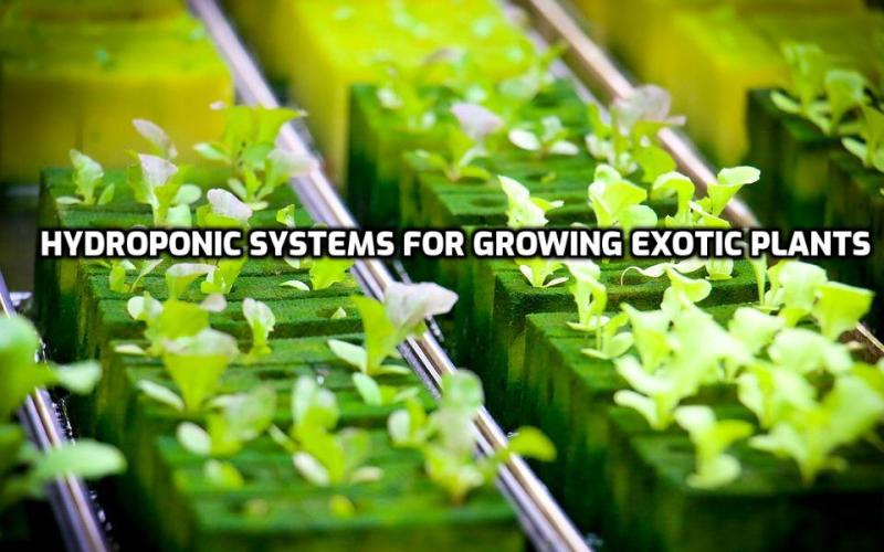 How to Growi Exotic Plants in Hydroponics.