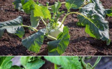 Vegetable Gardening for Dummies.