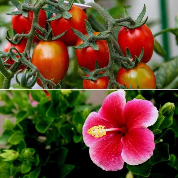 Garden Plants in India.