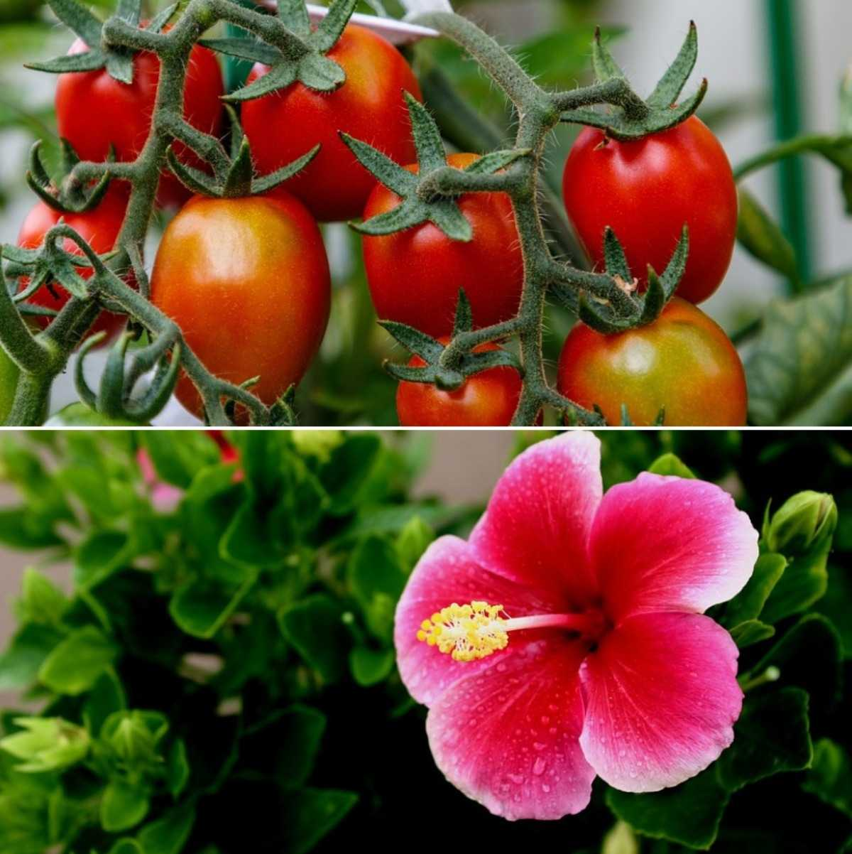 Garden Plants In India A Step By Step Guide Gardening Tips