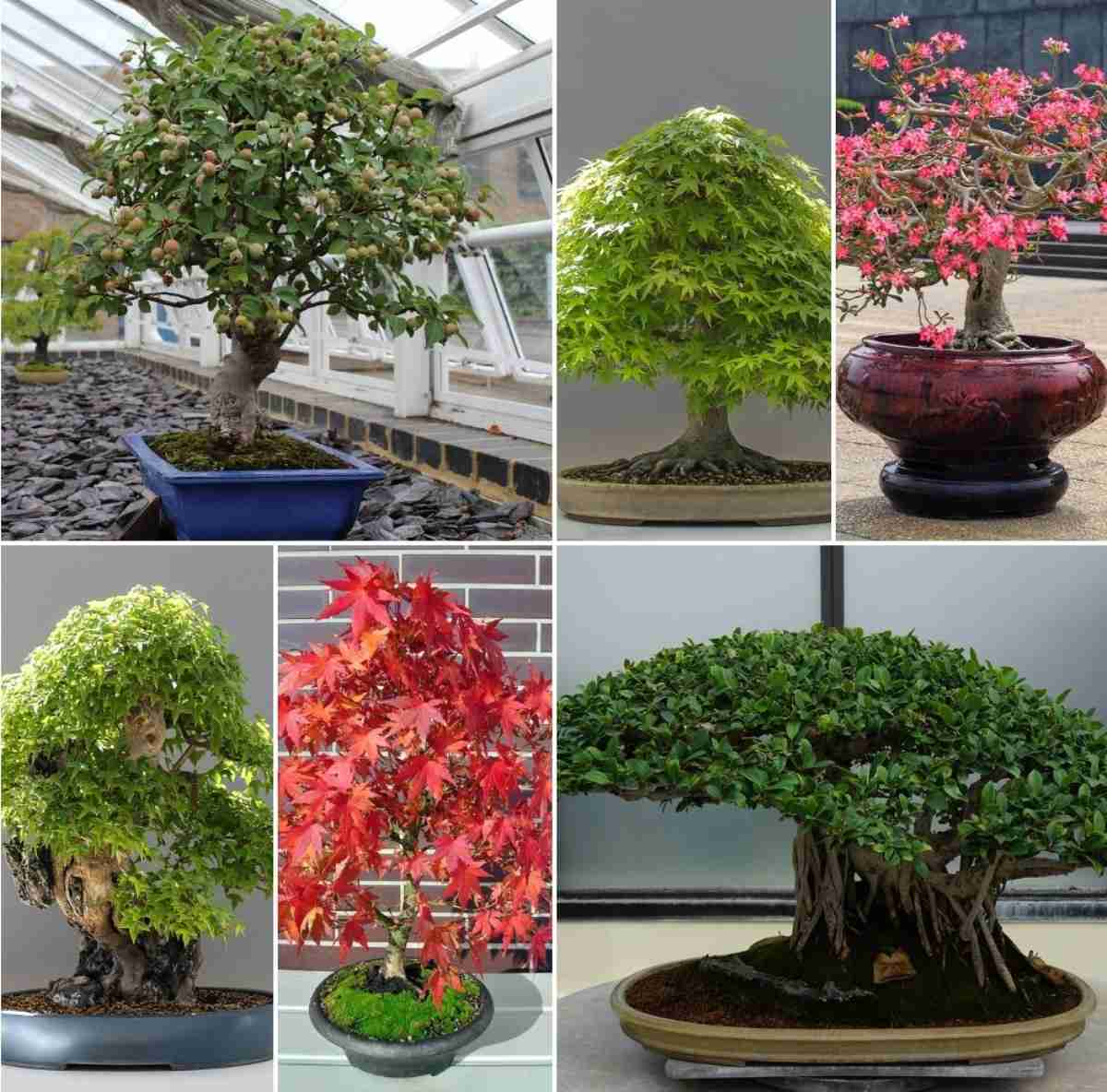 Bonsai Tree Types Bonsai Gardening Bonsai Care Gardening Tips