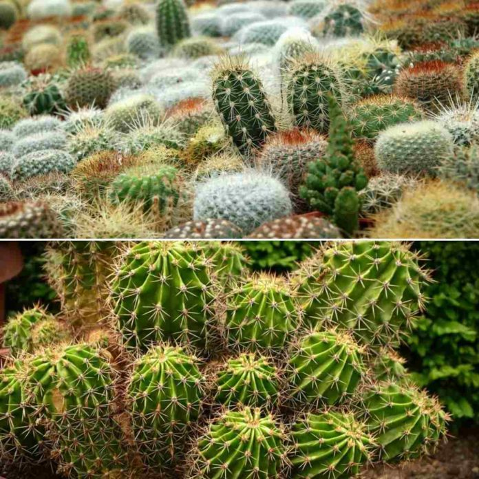 Types of Cactus.