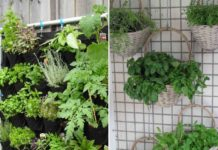 Suitable Plants for Vertical Gardening.