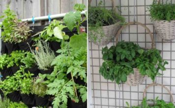 Suitable Plants for Vertical Gardening.