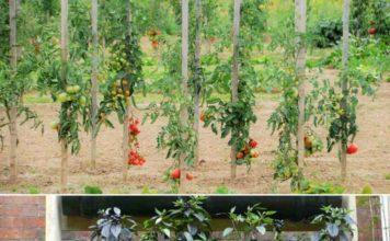 Vegatables for Vertical Gardening.