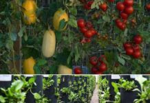 Vertical Vegetable Garden Ideas, Design, Layout