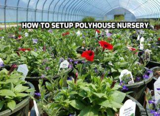 Polyhouse Nursery Setup.