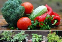 Container Gardening for Vegetables.